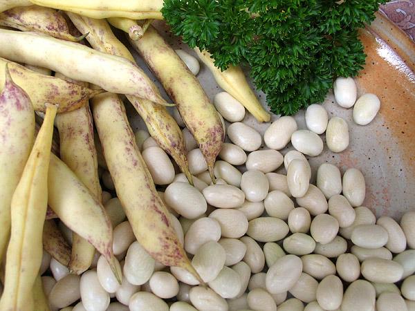 Haricots coco Paimpol_Naturo-Passion