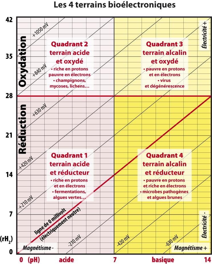 Les 4 terrains bioélectroniques